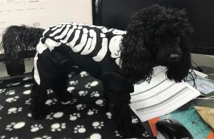 Cute Dog in Skeleton Costume