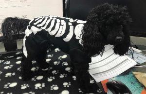 Cute Dog in Skeleton Costume
